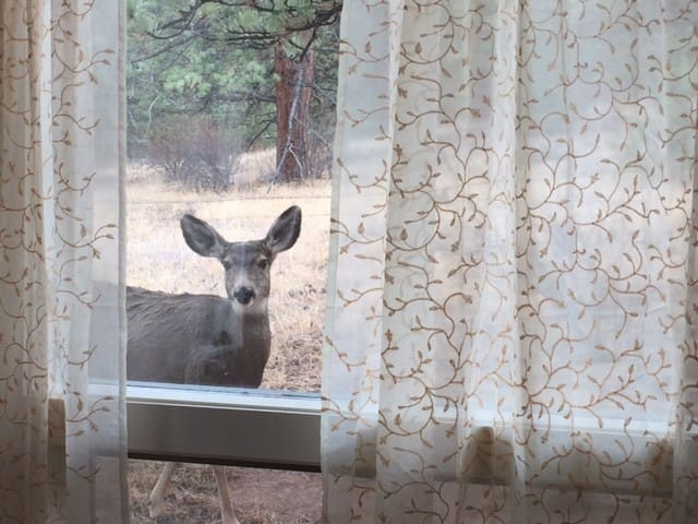 Buy One Get One FREE Nights in April! - Estes Park - House