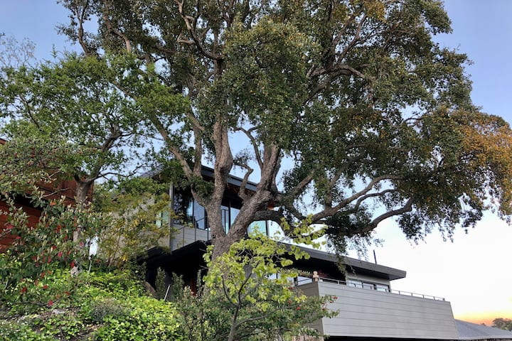 Treetop Pavilion Guest Suite in Marin