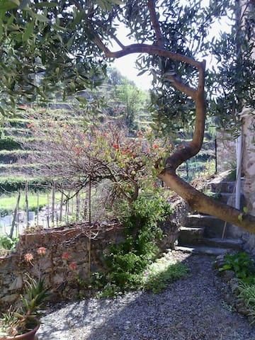Appartamento Auriva (con giardino privato) - Noli - Apartment