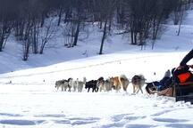 Chien de traineau, Igloo, batailles de boules de neiges, ballades en raquettes, ski de randonnée...