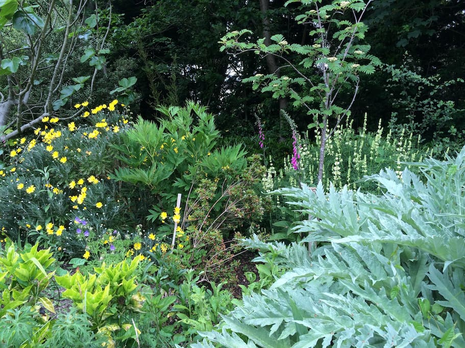 Luscious garden with plenty of artichokes in June & July!