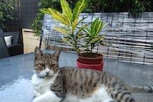 Nuestro gato.