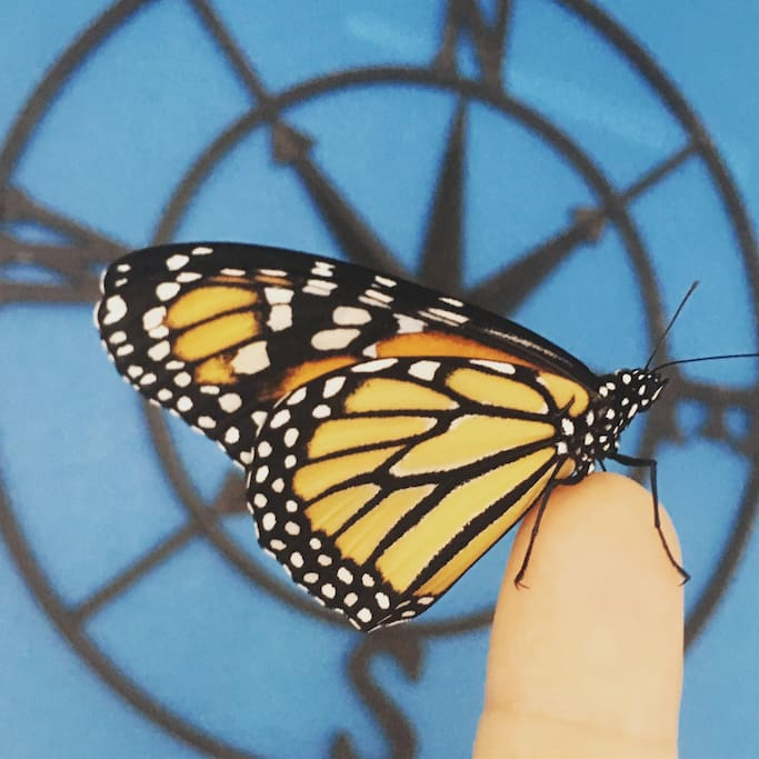 Monarch Butterfly - Follow us on IG MonarchGroveBeachHouse
