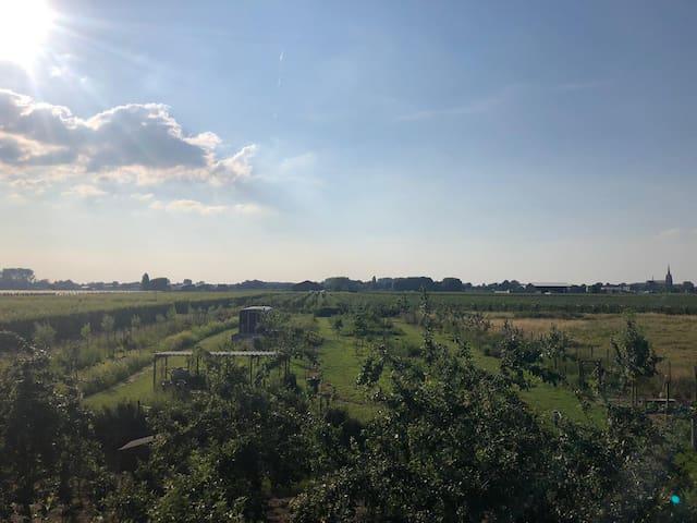 Tuin, tiny house en omringende boomgaarden in 1 oogopslag