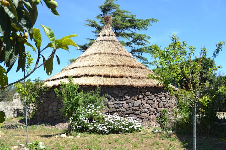 BUNGALOW  Sardinian hut