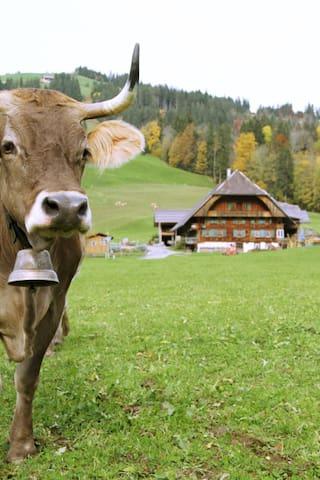 Ferienwohnung in altem Bauernhaus - Schangnau - Lägenhet