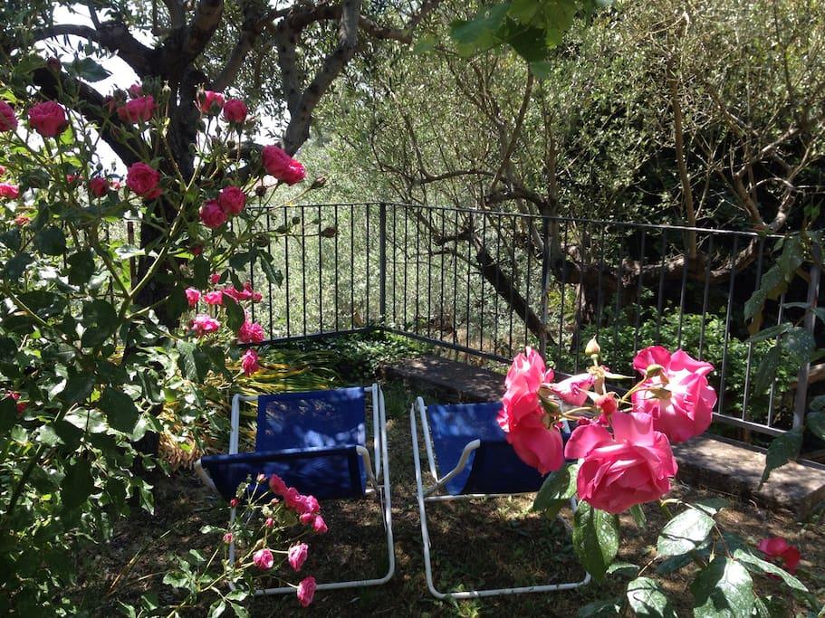 Relax fra le rose, vista mare fra gli ulivi