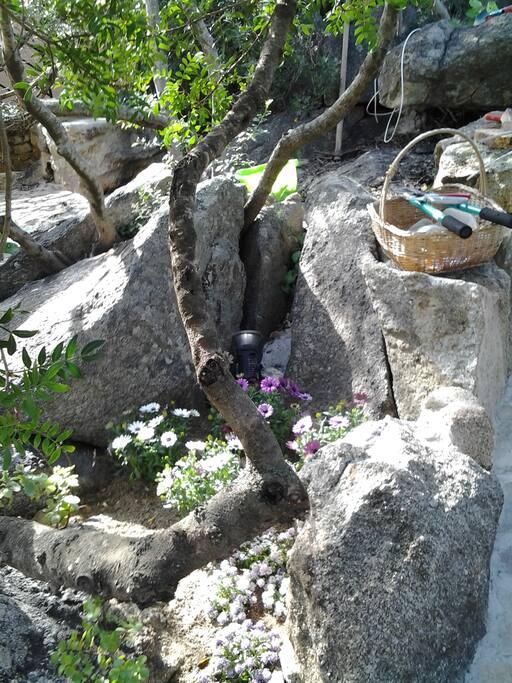 Un angolo del giardino roccioso
