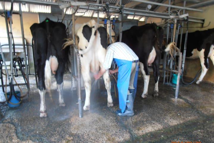 Fairway Farm - Dairy Farm Experience