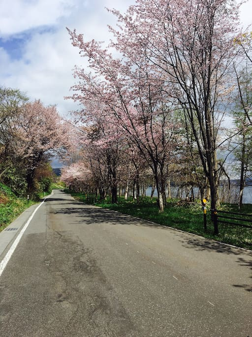 Sakura season, the end of April to mid May