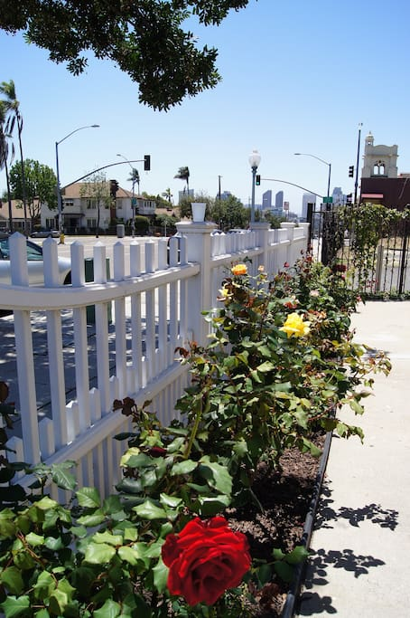 A White Picket Fence with Rose Garden.
