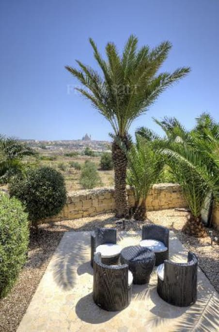 Garden with palms and olives trees.
