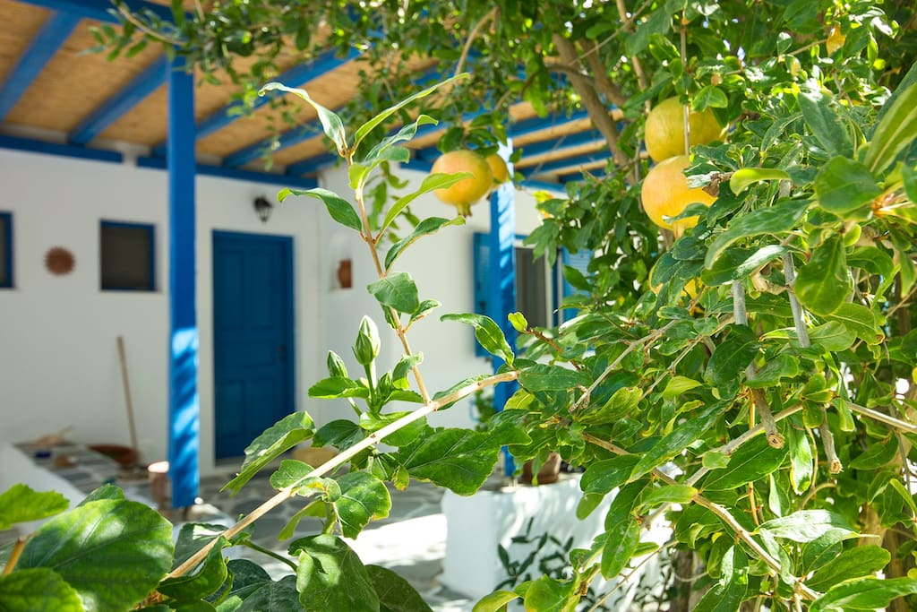 A pomegranate tree outside your room. Feel free to cut some upgrading your breakfast experience