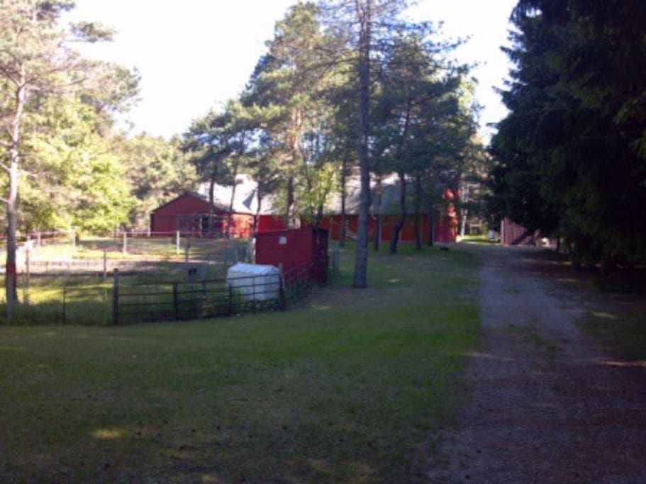 Looking down the drive out to the barn.