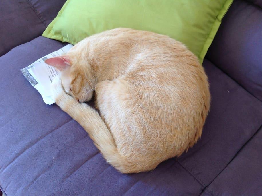 un joli petit chat restera dans la maison