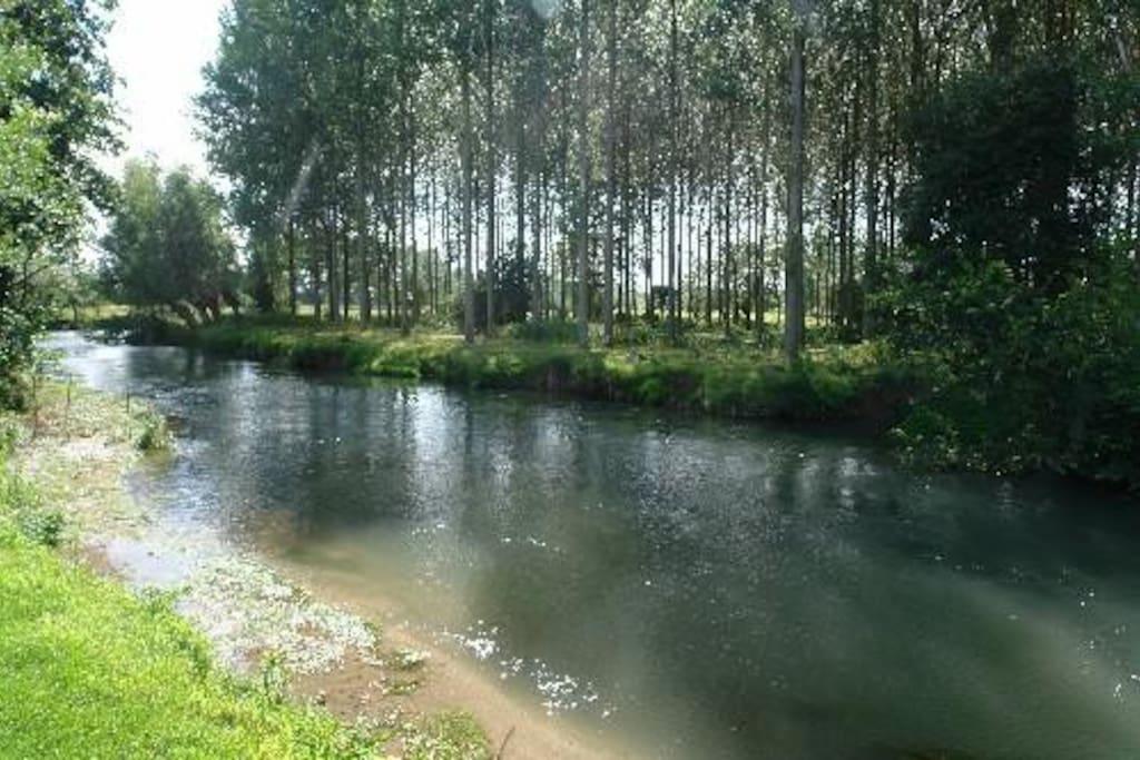 Rivière et peupleraie dans le domaine...