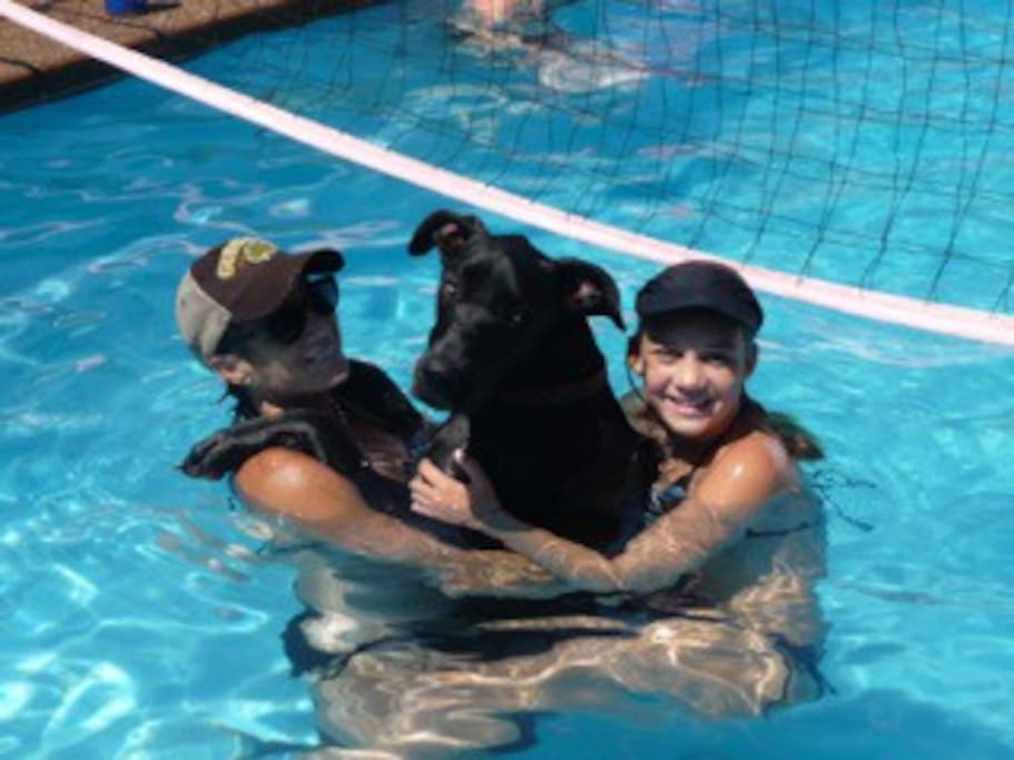 volleyball (and dog friends) in the pool