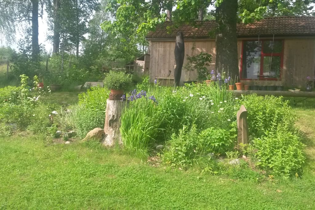 Garden and oak tree in front of the cottage.