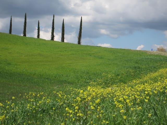 In the heart of beautiful Tuscany! - Radicondoli - Wohnung