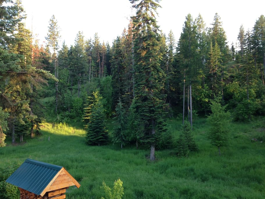View of the backyard in late May (animal browsing & crossing area)