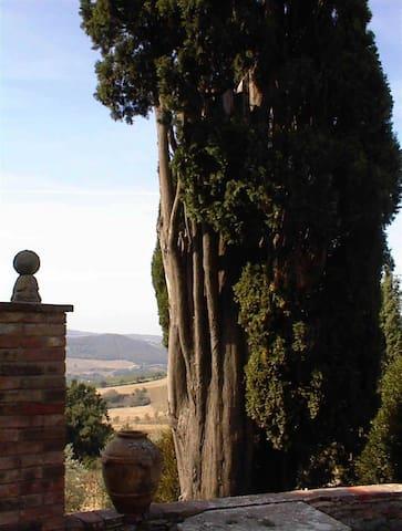 L' albero secolare