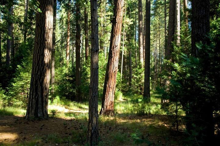 Cedar Lodge - Coarsegold - Chatka