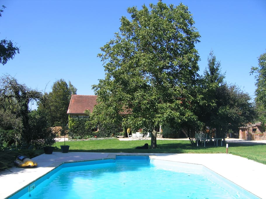 Grande piscine de 11 m par 5 avec fosse à plonger: une partie petit bassin de 1,2 de profondeur et une partie pour plonger de 2,4 m de profondeur
