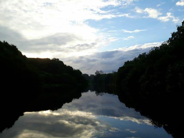 puedes hacer kayak en el manglar