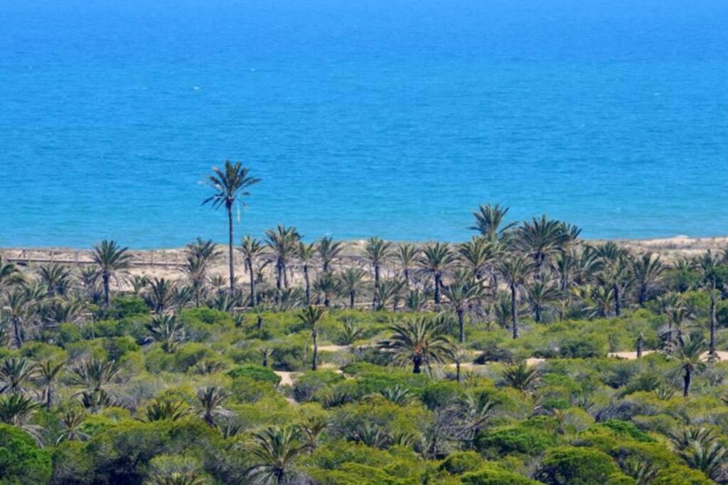 Vista de la Playa a través de la Pinada
