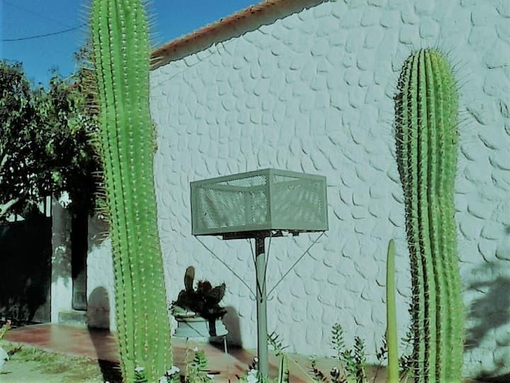 Cactusana 2
