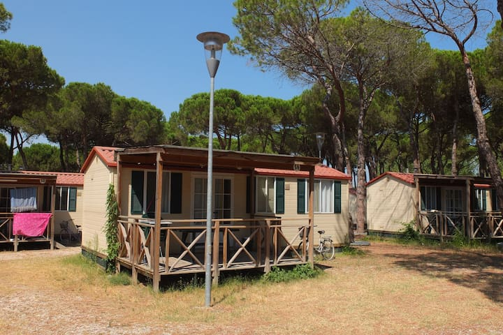 Nice chalet in a pine forest near the Adriatic sea