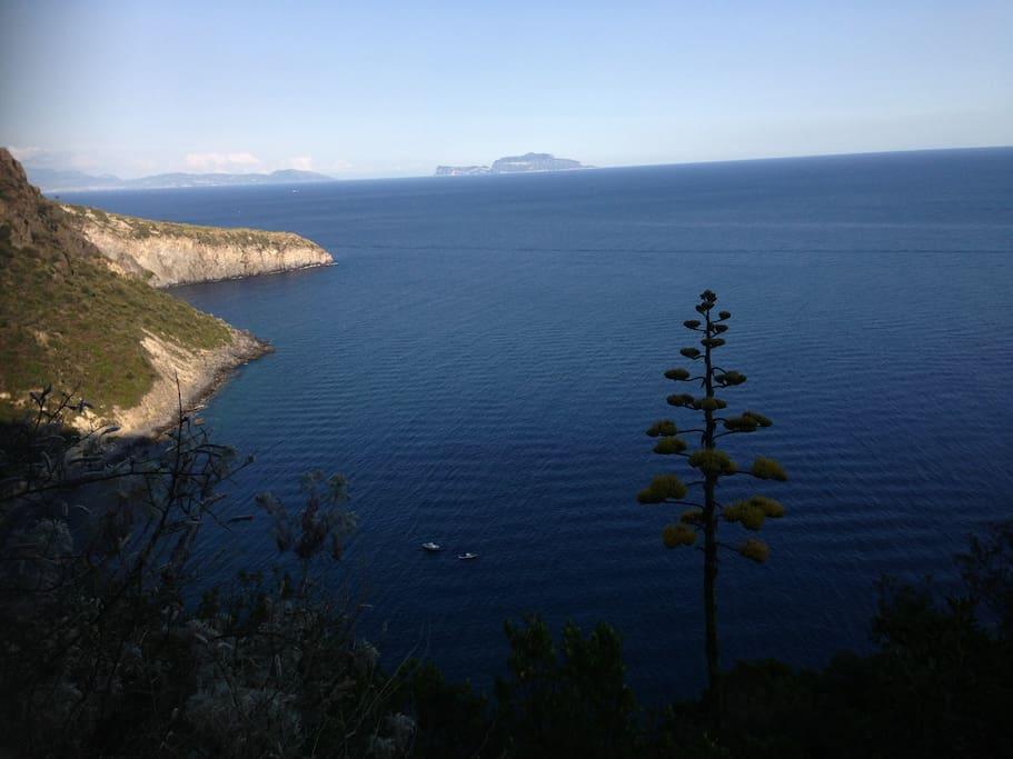 la costa di Ischia