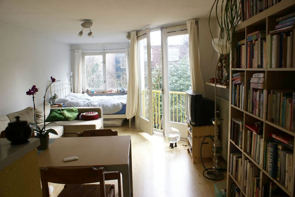 living room and bed by the window