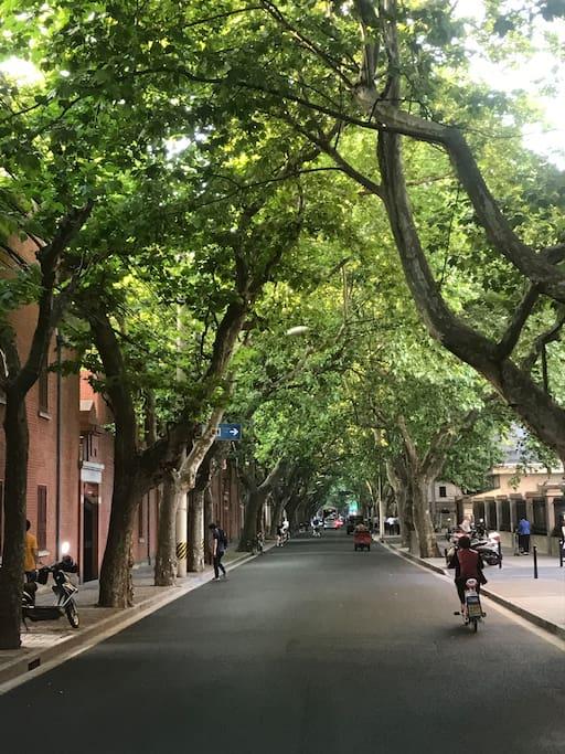 法租界核心地段 法国梧桐树影婆娑 紧靠建业里 岳阳路掠影 小区位于这条都市隐密花园一样的岳阳路 公寓本身就是上海历史保护建筑 住在其中 彷佛置身1930海上旧梦
