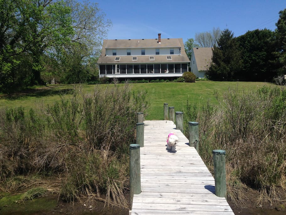 Back of the house from the dock. Screened porch runs the entire back of the house. Puppy not included :)