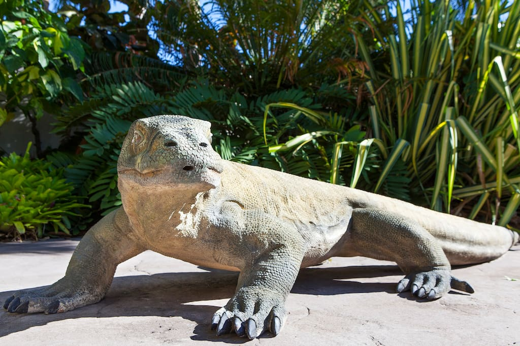 Our Komodo dragon will greet you in the front courtyard - not real of course! It is a replica of the bronze statue withthe live Komodo dragon exhibit at Taronga Zoo in Sydney. Manufactured by NATUREWORKS.