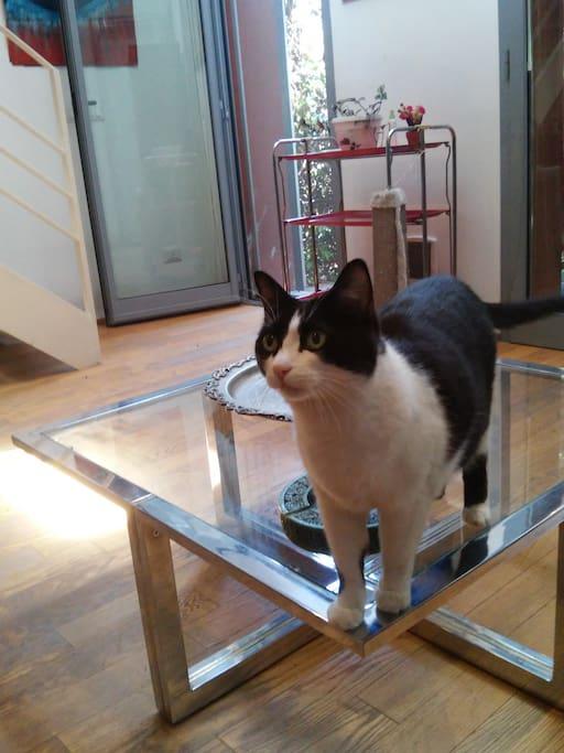 Mina, quando c'è, fa gli onori di casa :)