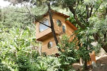 Snuggled in the tropical gardens, you will feel as though you are sleeping in the tree tops.
