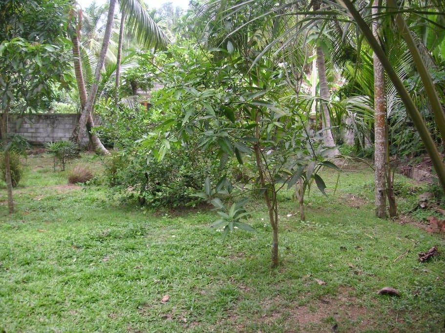 Een blik op de tuin met tropische vruchtbomen
