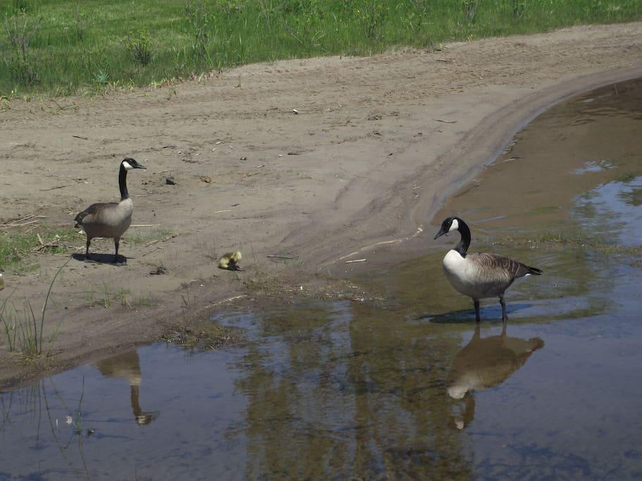 En face de votre chalet de deux chambres, sur le bord de l'eau, l'observation des oiseaux.