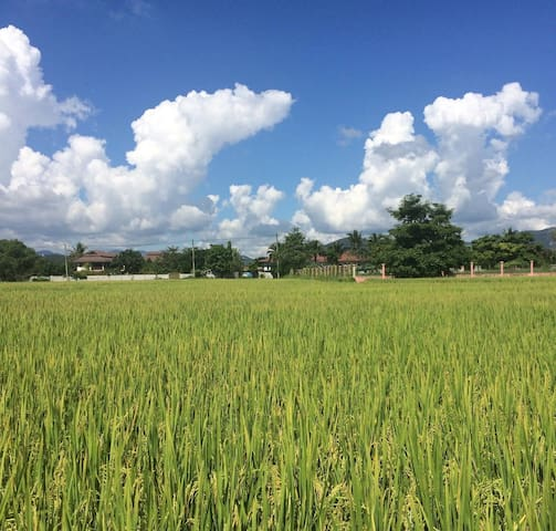 """A private """"island"""" surrounded by rice fields"""