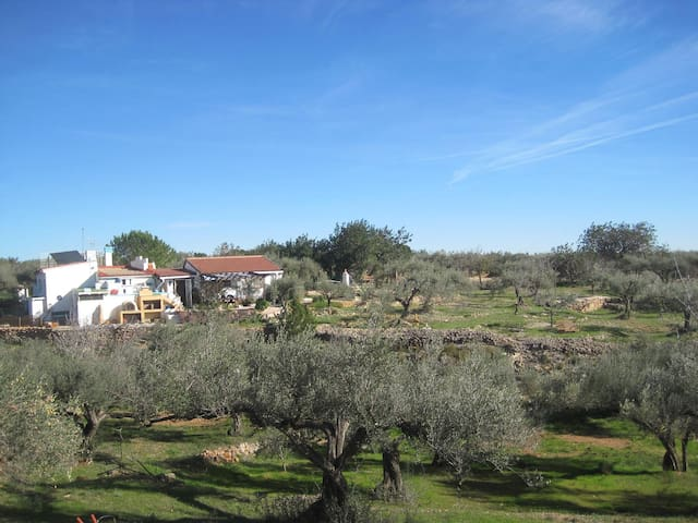 Charming Villa Delta Ebro Nat.Park - Camarles - House