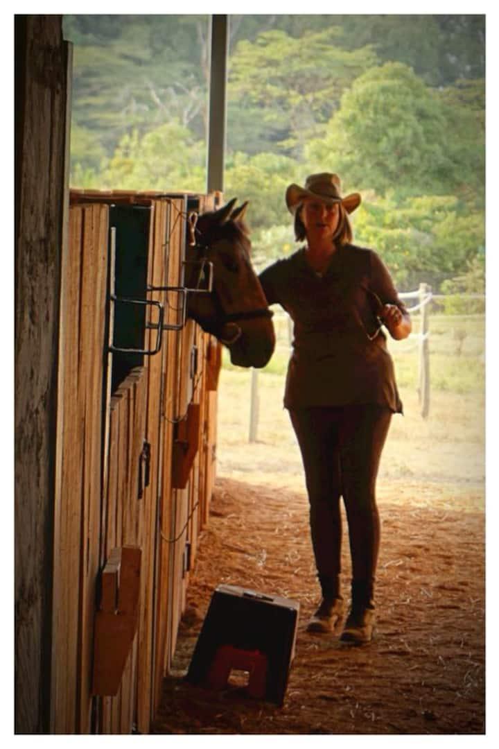 Horse socialising