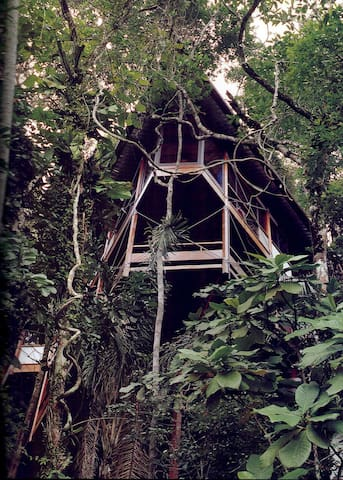 EcoHouse into Rainforest by the sea