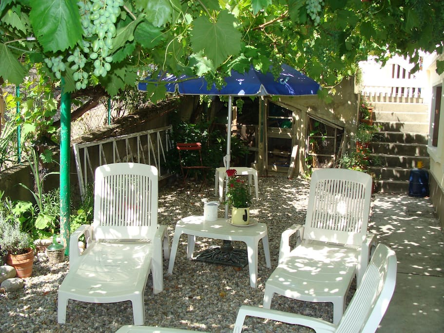 Read a book under the shade of the 60 year old vine - help yourself to the grapes!