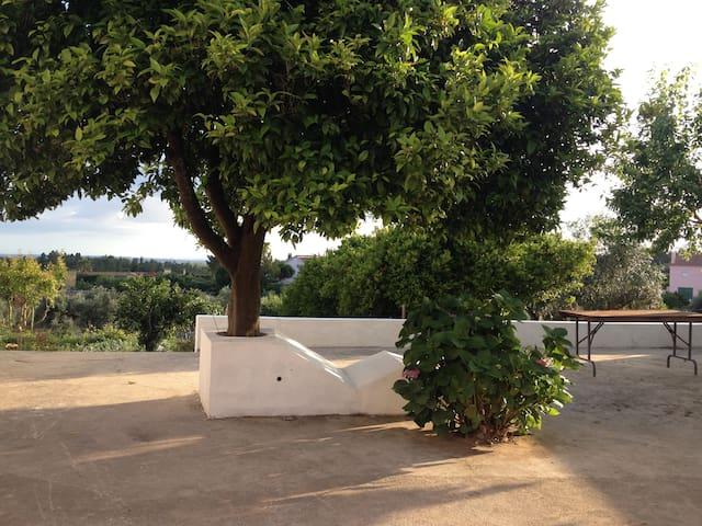 Casa da Fonte Velha - Tomar - บ้าน