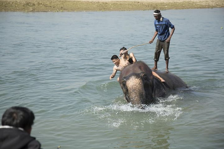 Homestay At Chitwan  Near By National Park