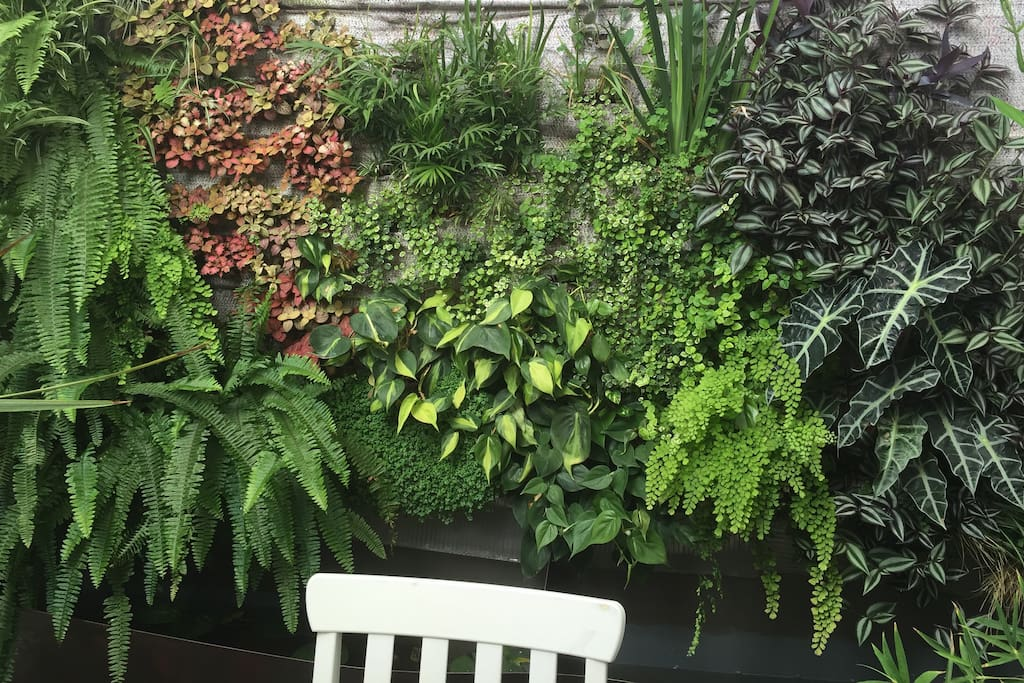 A Vertical garden! the new host in the house