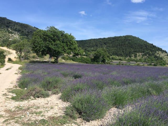 Au pays du soleil, jolie Maison Provençale.