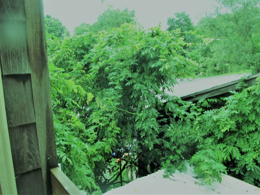 View over the treetops from your balcony